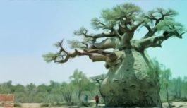 Baobab, integrazione vuole dire fiducia