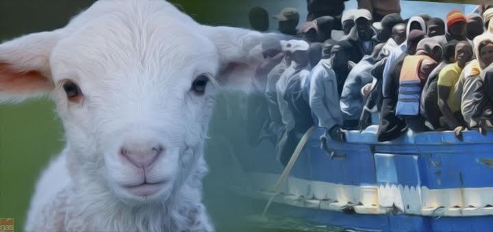 profugo agnello