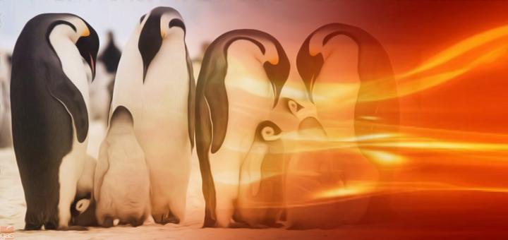 pinguini riscaldamento climatico
