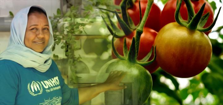 pomodori profughi