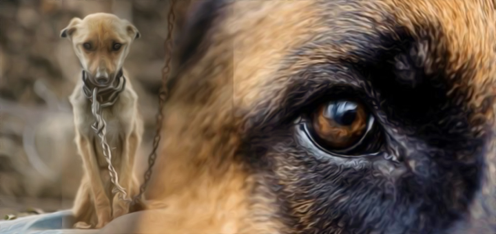 cane-maltrattato-copia