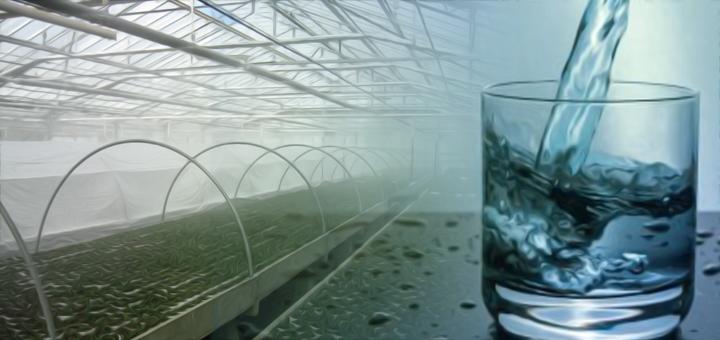 acqua-colture