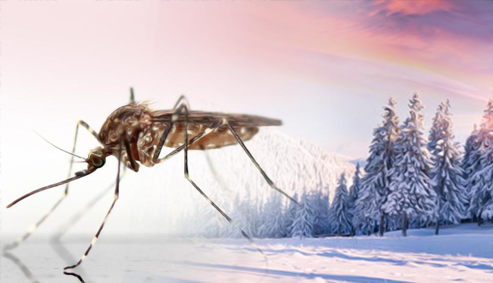 zanzara-inverno