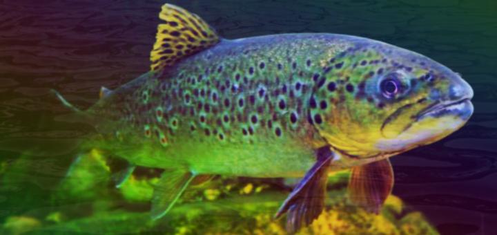 pesce-fatto