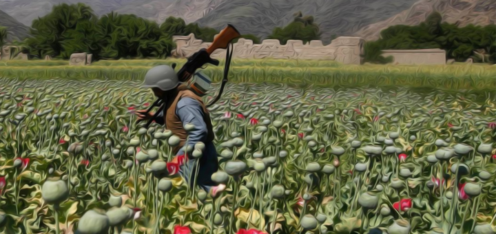 talebani oppio